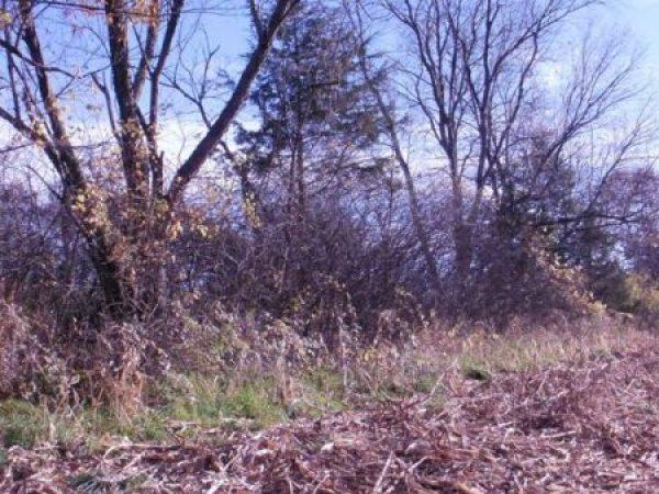 Tree Pruning Service Fenceline Before