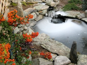 Fish_pond_in_winter