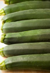 Zucchinis at the starting gate