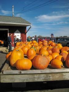 Lots of pumpkins at Solly's