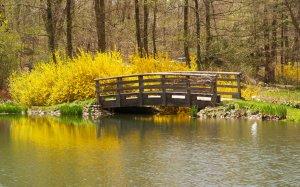 Spring! photo MSClipArt
