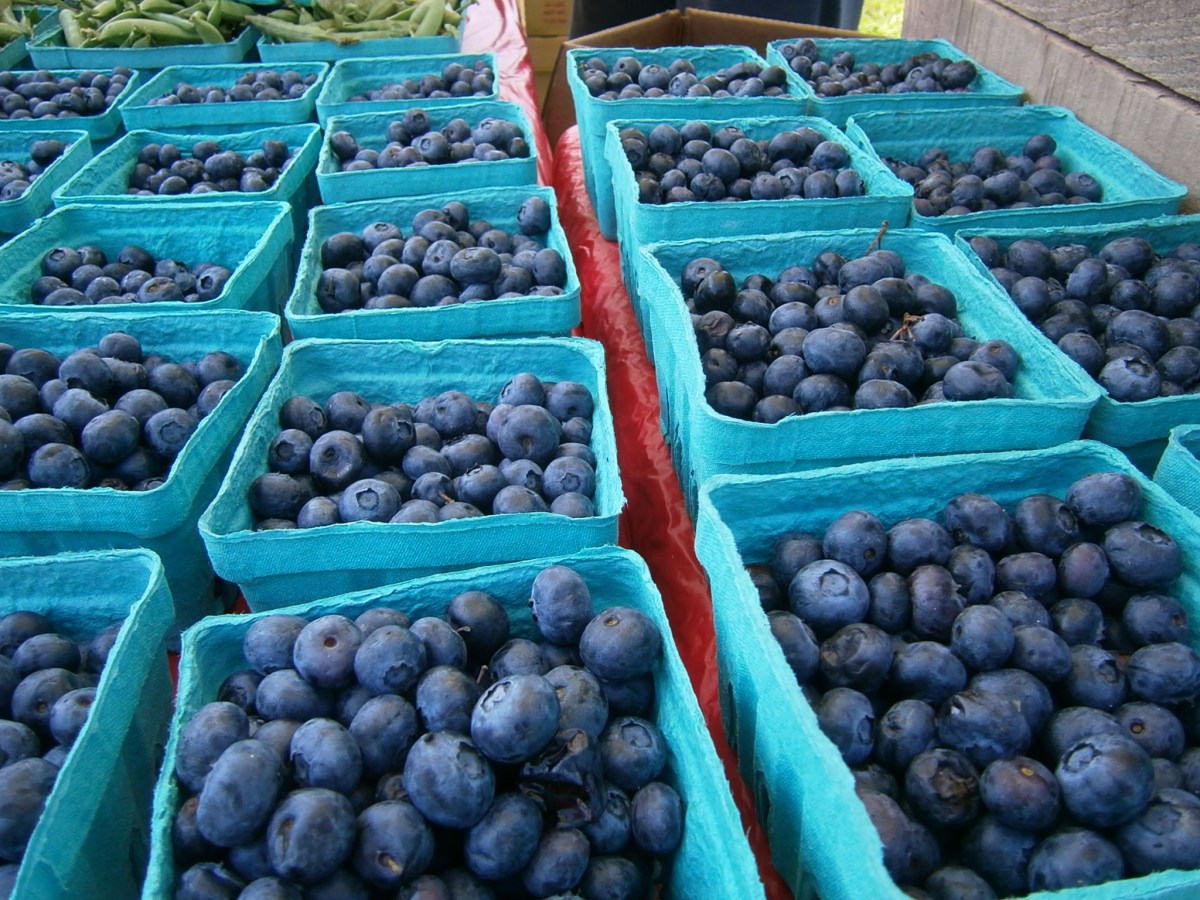 Blueberries, cherries and raspberries, oh my!