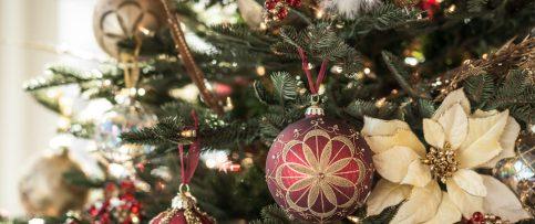 Christmas tree_Golden Pheasant