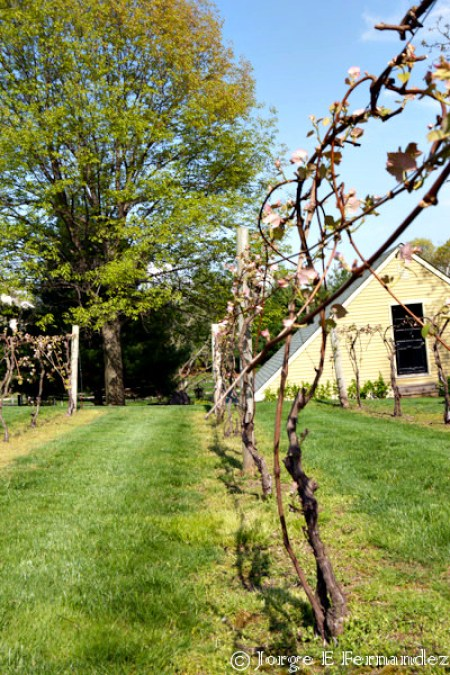Spring comes to Crossing Vineyards