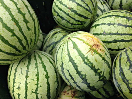 Yellow Watermelon from Blooming Glen Farm