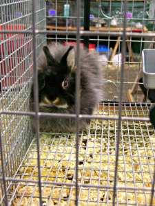 Bunny at the Grange Fair