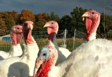 Purely Farm's Pasture-Raised Meats, Turkey
