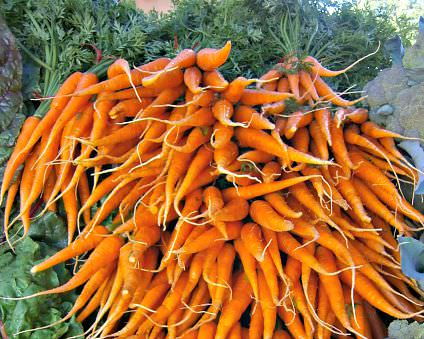 Carrots, Blooming Glen Farm, photo: L. Goldman
