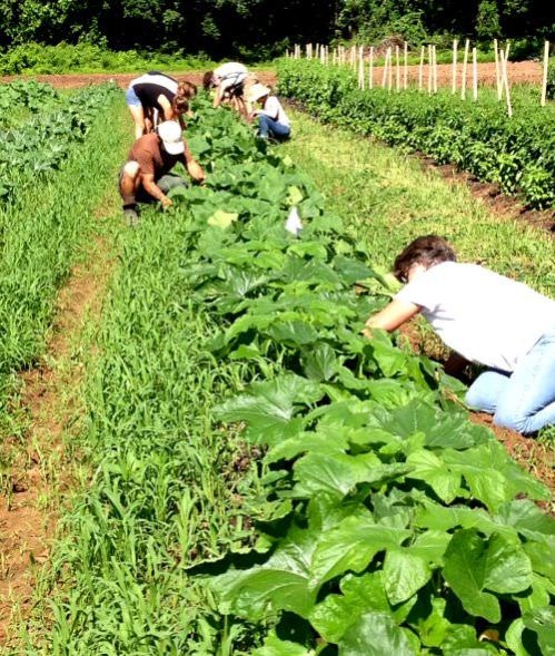 Carversville Foundation Farm with RHFR volunteers; photo credit Lynne Goldman
