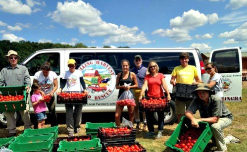 Gleaners after tomato harvest