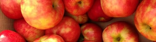 Apples_solebury orchards