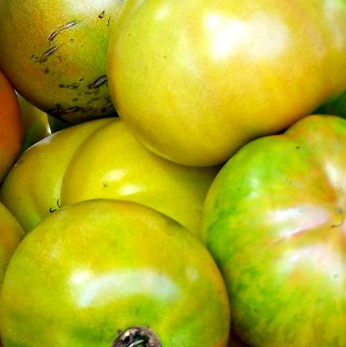 Recipes for the Season: Fried Green Tomatoes