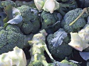 broccoli_blooming-glen-farm_photo-credit-lynne-goldman_500x510