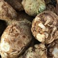 Celeriac_photo credit Lynne Goldman