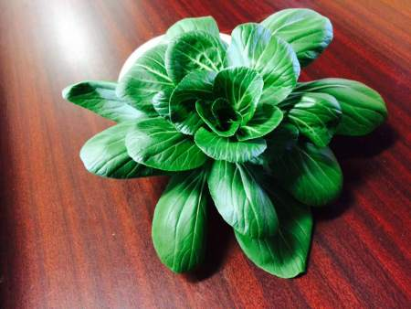 Bok Choy, Maximucks Farm Market