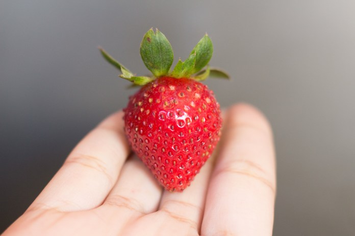 Strawberry, Marc Fulgar