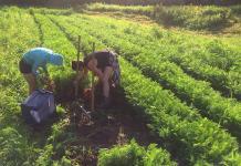 Farming, Rolling Hills Farm
