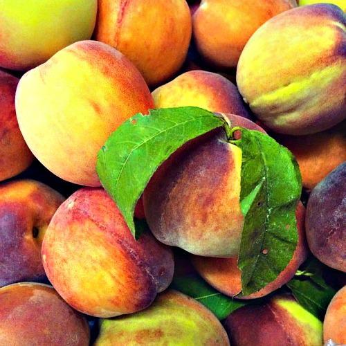 Bechdolt's peaches