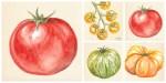 Tomatoes, PAVeggies.org