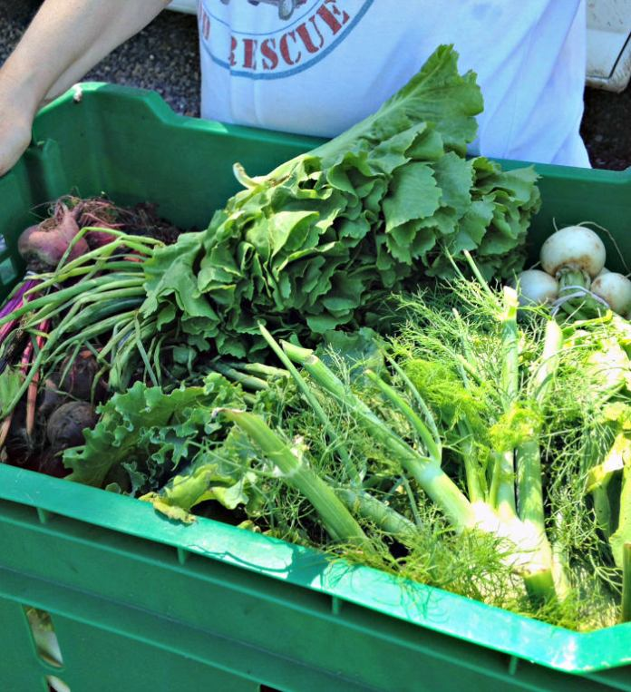 Rolling Harvest Food Rescue's Cathy Snyder holds produce donated by Roots to River Farm; photo credit Lynne Goldman