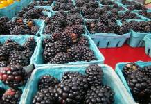 Blackberries; Shady Brook Farm