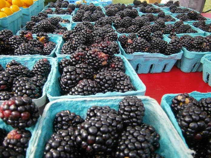 Blackberries; Shady Brook Farm