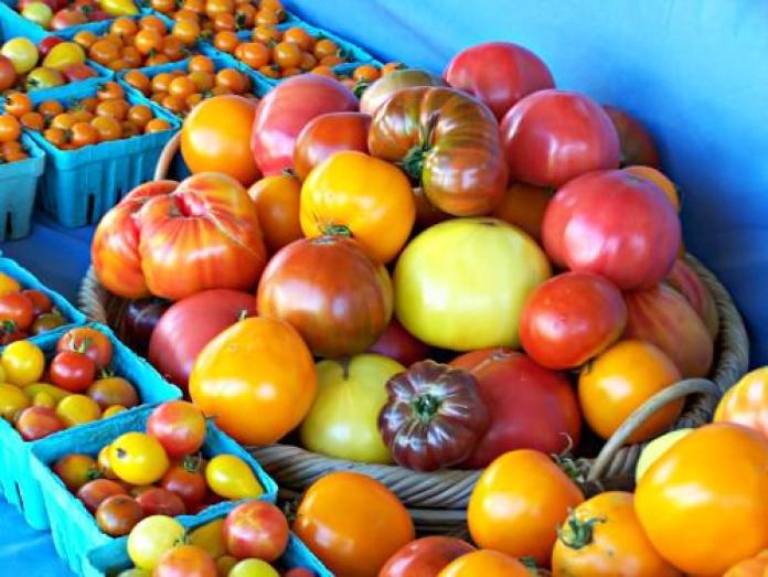 Tomatoes; photo credit Lynne Goldman