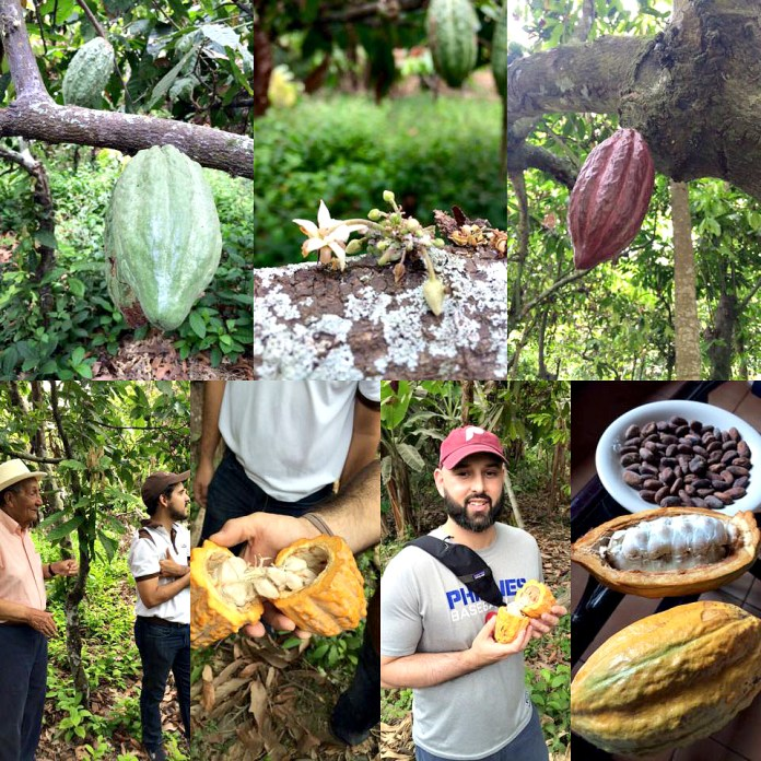 Cacao bean farm, Peru. Photo courtesy Pierre's Chocolates