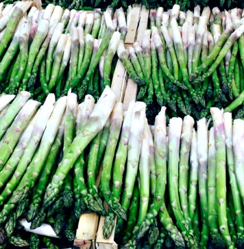 Asparagus_photo credit Martine Bertin-Peterson