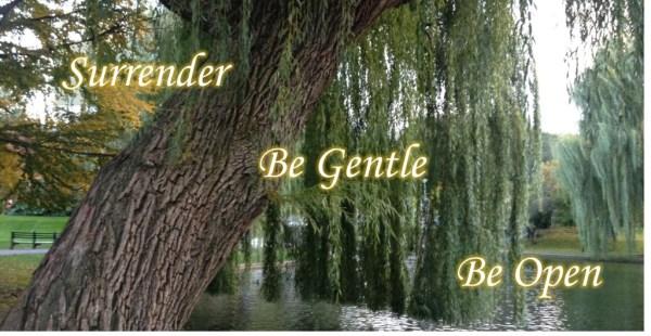 surrender gentle open