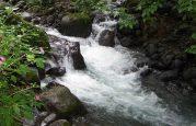 Costa Rican Stream