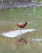 Bird near water