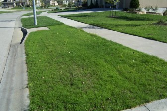 All new grass for a beautiful new lawn.