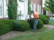 Shrub Care 1