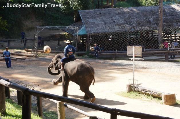 พาลูกเที่ยว_เชียงใหม่_ปางช้างแม่สา10_รีวิว