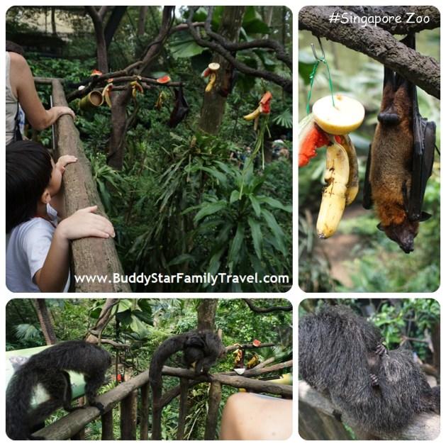 สวนสัตว์สิงคโปร์,pantip,singapore zoo, เด็ก, ที่เที่ยว, พาลูกเที่ยว