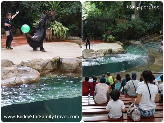 singapore zoo, พาลูกเที่ยว, สิงคโปร์, ที่เที่ยว, เด็ก, สวนสัตว์สิงคโปร์