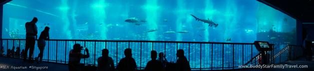 SEA Aquarium, Singapore, อควาเรียม,สิงคโปร์,รีวิว,เด็ก,ที่เที่ยว