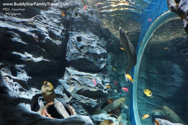 อควาเรียมสิงคโปร์, อควาเรียม, สิงคโปร์, Aquarium, SEA, ที่เที่ยวเด็ก, พาลูกเที่ยว, รีวิว, Review