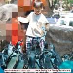 ให้อาหารเพนกวิน, ป้อนอาหารเพนกวิน, เขาเขีียว, สวนสัตว์เขาเขียว, รีวิว, review, เด็ก