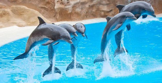 พาลูกเที่ยวนาโกย่า,สัตว์,อควาเรียม, nagoya port, ที่เที่ยว,เด็ก, กิจกรรม