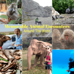 Memorable Animal Encounters Around The World