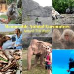 Memorable Animal Encounters Around The World