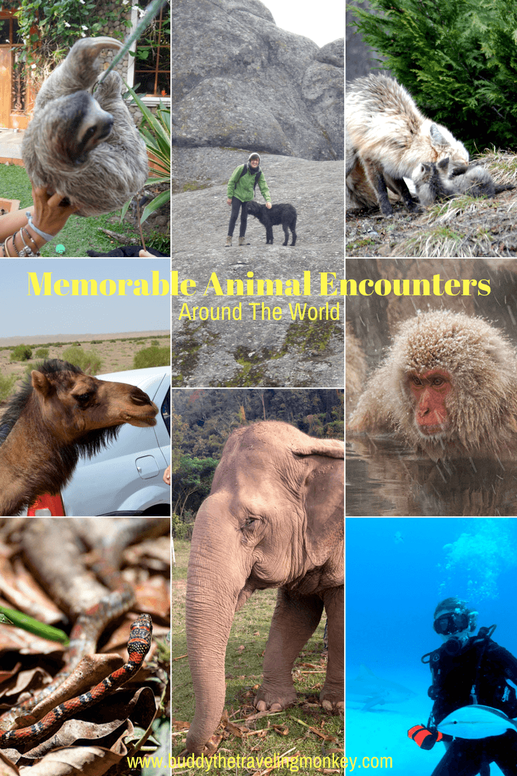 Traveling leaves us with incredible experiences and memories. In this post, we learn about the memorable animal encounters that travel bloggers have experienced all around the world.