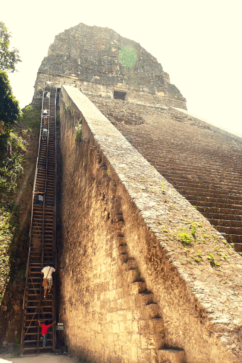 Buddy The Traveling Monkey Stairs With A View