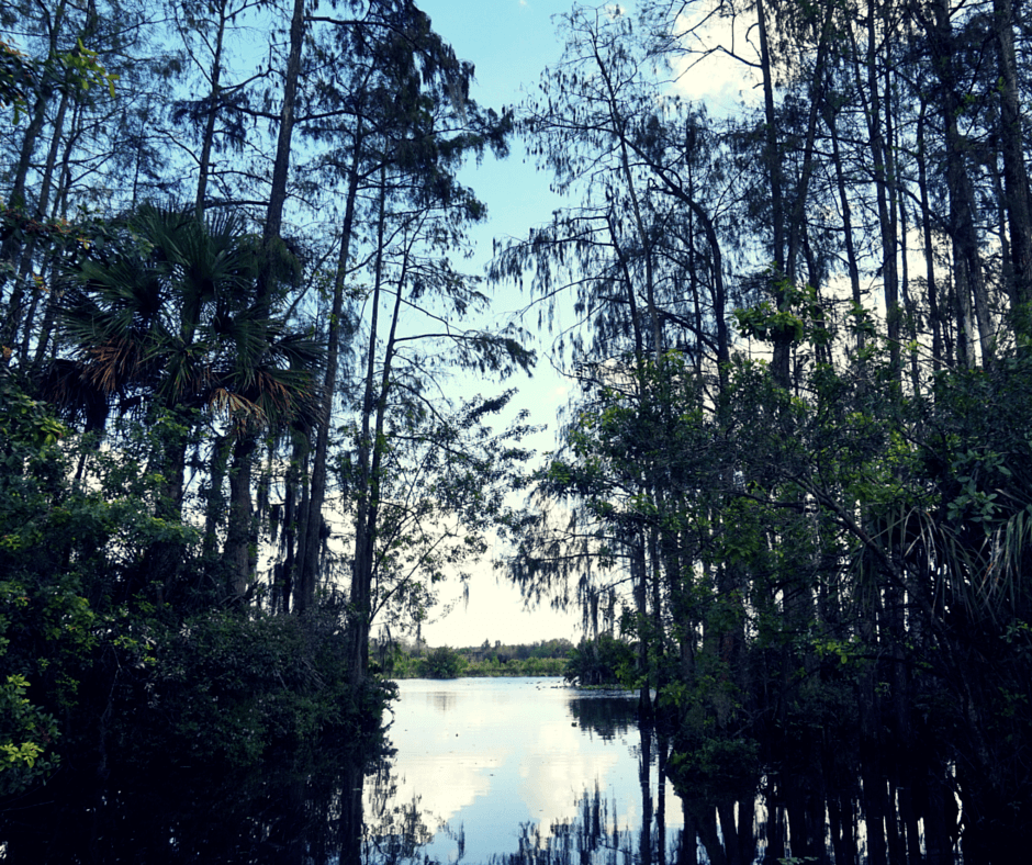 airboat ride through the everglades with Billie Swamp Safari
