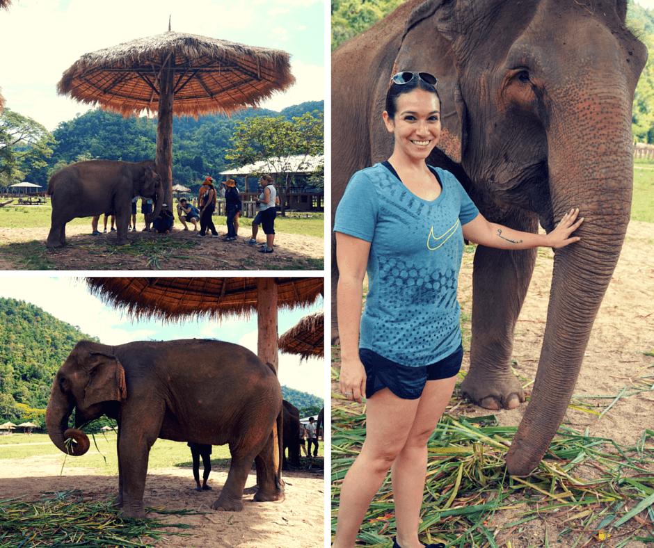 Watching the elephants eat at Elephant Nature Park
