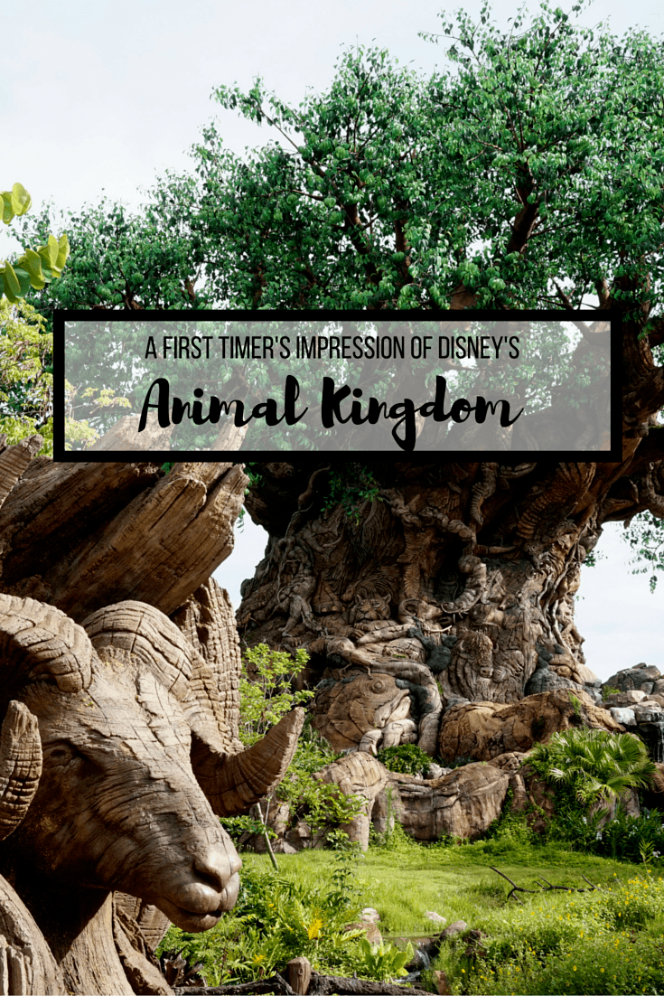 Our first visit to Disney's Animal Kingdom was epic! We saw so many animals, enjoyed amazing shows, and rode a thrilling roller coaster!