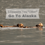 "Five Reasons You ""Otter"" Go To Alaska"