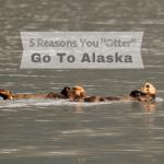 "Five Reasons You ""Otter"" Go To Alaska"